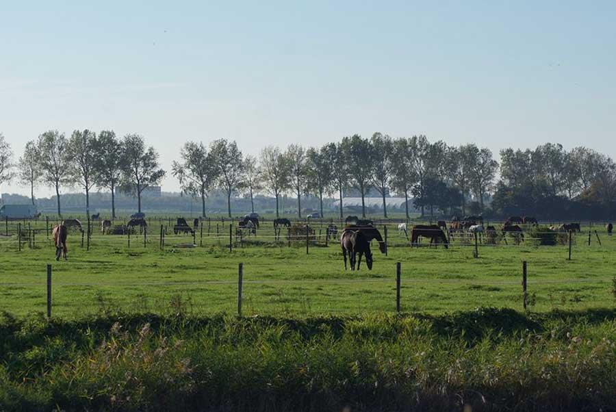 Accommodatie-Meers-paarden-centrum-1