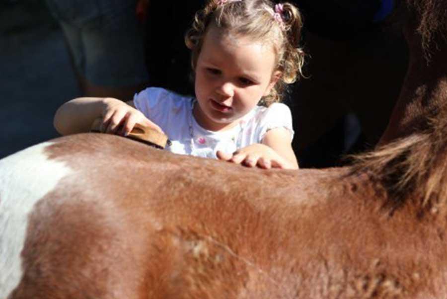 Accommodatie-verzorging-Meers-paarden-centrum-1