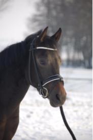 Kalousha lease pony