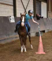 Leaspaard-Meers-paarden-centrum-Bennie-1