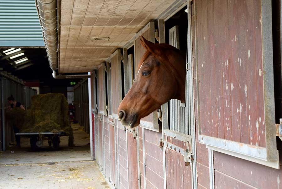 MPC-sporthorses