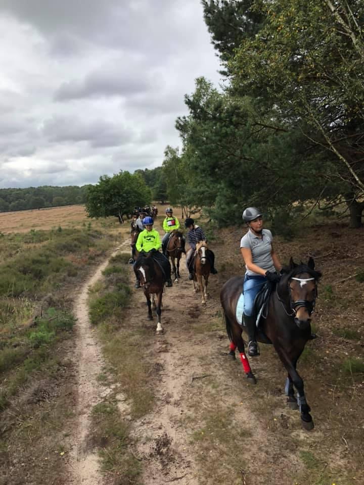 Paarden- en ponykampen